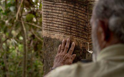 A Falsa Promessa – Episódio Madeira Mamore